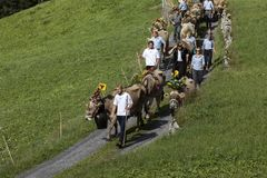 Wassen Schweiz, September 15 2018: Ceremoniel som ner kör av nötkreatur arkivbild