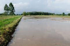 Wasser angemeldetes Feld Stockbilder