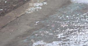 Wasser auf Asphalt im Frühjahr stock video