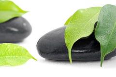 Wasser auf Blättern und Steinen Stockbild
