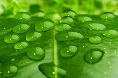 Wasser auf Blattnahaufnahme Stockbild
