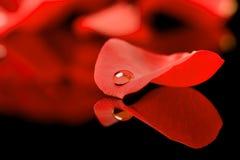 Wasser auf Blumenblatt Stockfotos