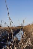Wasser auf dem Gebiet Stockbild