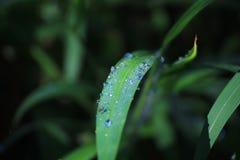 Wasser auf dem grünen Blatt Stockfoto