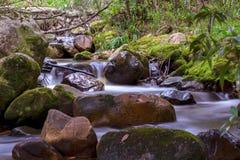 Wasser auf den Felsen in einem Wald lizenzfreies stockbild