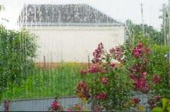 Wasser auf Fenster 2 Stockfotografie