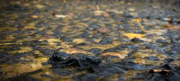 Wasser auf Herbstlaub Stockfotos