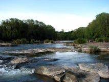 Wasser-Bäume lizenzfreie stockfotografie