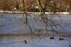 Wasser, Bäume, Enten und Schnee - Frankreich Stockbild