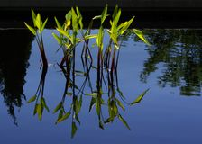 Wasser bedeckt A mit Gras lizenzfreies stockfoto