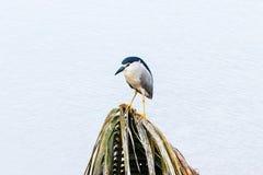 Wasser betrügt Vogel vom Stauwasser in Kerala lizenzfreies stockbild