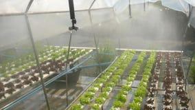Wasser-Bewässerungs-Nebel am Wasserkulturgemüse-Plantagen-Bauernhof HD slowmotion thailand stock video
