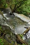Wasser-Bewegung, Waldnebenfluß Lizenzfreie Stockfotos