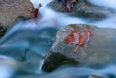 Wasser, das über Blatt und Felsen fließt Stockfotografie