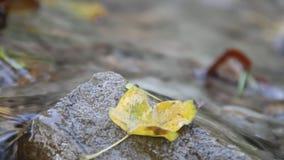 Wasser, das über Felsen und Herbstlaub fließt stock footage