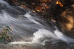 Wasser, das durch gefallene Blätter fließt Lizenzfreie Stockfotos