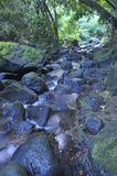 Wasser, das durch Wald sich bewegt Lizenzfreie Stockbilder
