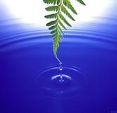 Wasser, das vom Blatt fällt Stockfotografie