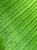 Wasser dropplets Lizenzfreies Stockfoto