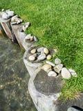 Wasser entsteint Gras und Holz stockfotos