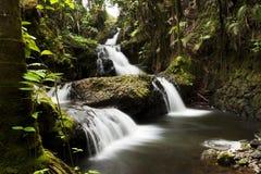 Wasser-Fall in den tropischen botanischen Garten Hawaiis Stockfotos