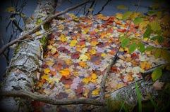 Wasser-Farben Lizenzfreies Stockbild
