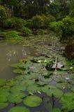 Wasser-Garten in Taipeh, die Republik China Stockfotos
