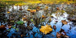 Wasser, Gras und Blätter stockbilder