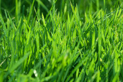 Wasser im grünen Gras Stockfoto