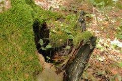 Wasser im Stumpf stockbilder