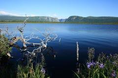 Wasser im Sumpf am westlichen Bach Stockbilder