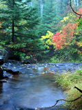 Wasser im Wald Stockbild