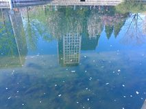Wasser ist ein Spiegel, der die Wasserwelt mit der Unterwasserwelt anschließt lizenzfreie stockfotos