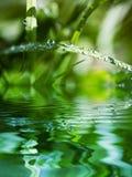 Wasser-Korne auf Blatt des Grases Stockfotos