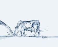 Wasser-Kuh-Trinken Stockbilder