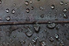 Wasser lässt Nahaufnahme auf Feder fallen lizenzfreies stockbild
