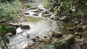Wasser laufen gelassen durch Flussdurchlauffelsen und -stein im forset stock video footage