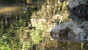 Wasser laufen gelassen durch Flussdurchlauffelsen und -stein im Wald stock video