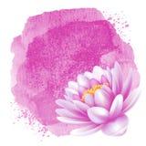 Wasser lilly Stockbilder