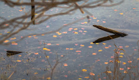 Wasser Lilly Auflagen Stockbilder