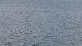 Wasser mit kleinen Wellen stock video footage