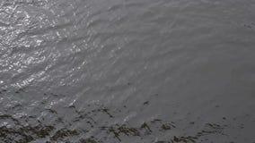 Wasser mit kleinen Wellen und Sonnengrellem glanz Draufsicht des Flusses stock video footage