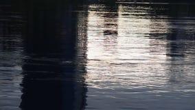 Wasser-Oberfläche stock footage