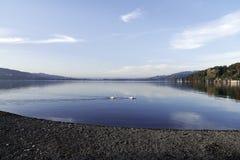 Wasser-Reflexion Schwäne der Meerblick-Schweiz Aargau lizenzfreies stockfoto