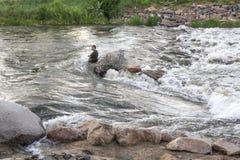 Wasser-Rettung auf Fluss Lizenzfreie Stockfotos