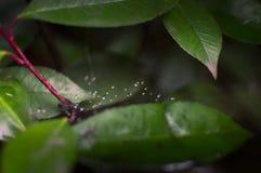 Wasser schwimmt auf ein Spider& x27; s-Netz lizenzfreie stockfotos
