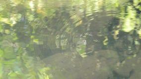 Wasser strider oder Teich sketer, das auf Flussoberfläche im Wald schwimmt stock video