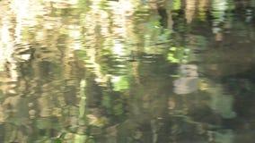 Wasser strider oder Teich sketer, das auf Flussoberfläche im Wald schwimmt stock video footage