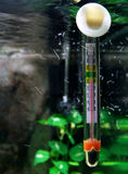 Wasser-Thermometer lizenzfreies stockfoto