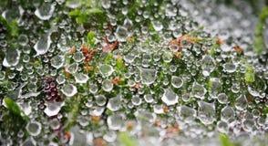 Wasser-Tröpfchen auf einem Spinnen-Netz Stockfoto